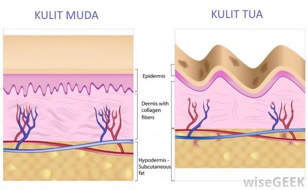 ilustrasi kulit yang menua akibat produksi kolagen menurun